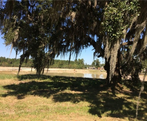 Madewood Street- Sulphur- Calcasieu- Louisiana- United States 70663, ,Vacant Land,For Sale,Madewood Street,1079